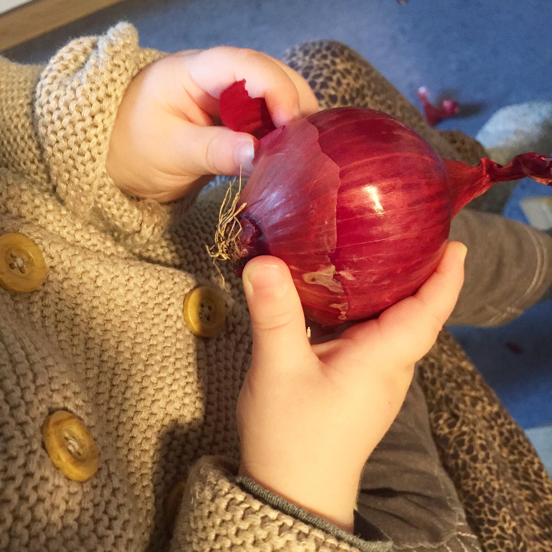 Kind untersucht Zwiebel