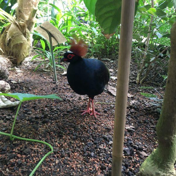 Exotischer Vogel