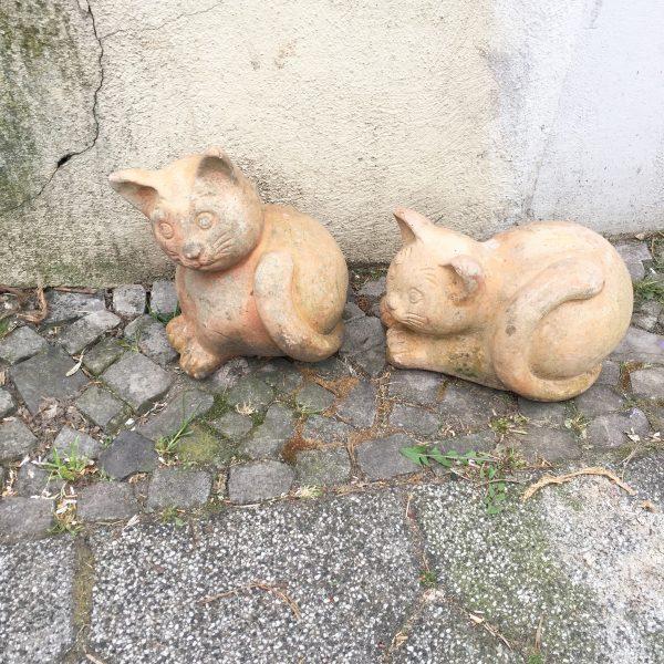 Katzen am Straßenrand